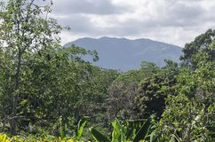 Humid mountain forest in the central mountain range of Dominican republic royalty free stock image