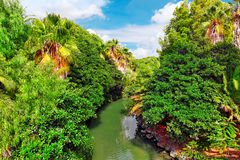 Humid tropical jungle. Royalty Free Stock Image
