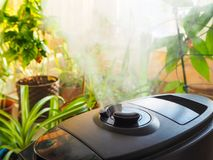 Humidification for cultivation of flowers. The steam from the air humidifier in the room. Humidification for cultivation of flowers. The steam from the air Stock Image