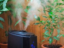 Humidification for cultivation of flowers. The steam from the air humidifier in the room. Humidification for cultivation of flowers. The steam from the air Stock Photo