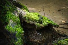 Humidité dans la forêt tropicale chez Sai Yok National Park photographie stock libre de droits