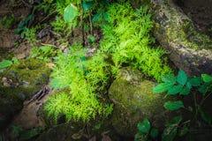 Humidité dans la forêt tropicale chez Sai Yok National Park photos libres de droits