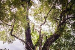 Humidité dans la forêt tropicale chez Sai Yok National Park images stock