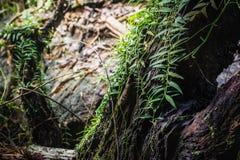 Humidité dans la forêt tropicale chez Sai Yok National Park image stock