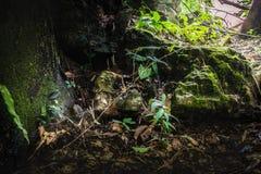 Humidité dans la forêt tropicale chez Sai Yok National Park photos stock