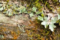 Humidité de lichen images stock
