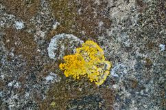 Mold and fungi on the plaster of a wall. Humidity forms fungi and mold on the plaster of a wall stock photo