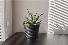 Humidity and quality of air in the house concept. Aloe succulent cactus plant in small pot on background of window with blinds. Humidity and quality of air in stock image