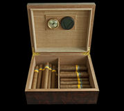 Humidor and cigars Royalty Free Stock Images