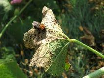 Humilde-abeja Fotografía de archivo