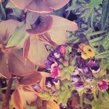 Humla och blommor Royaltyfria Foton