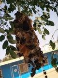Hummbird' гнездо s стоковое фото rf