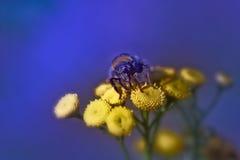 Hummel auf Blume Stockbilder