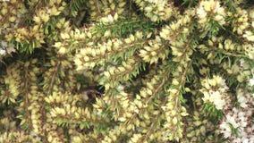 Hummel auf Blumen stock footage