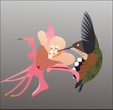 Hummel-Kolibri Lizenzfreie Stockfotografie