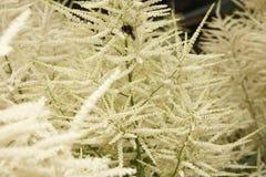 Hummel und Blumen Stockfoto