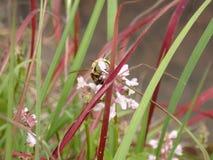Hummeleine kleinigkeit essen Lizenzfreies Stockbild
