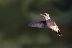 Hummer images stock