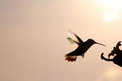 Hummer d'arc-en-ciel au port de alimentation photos libres de droits