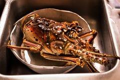 Hummer für Abendessen Lizenzfreies Stockfoto