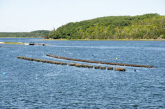Hummer schließt - Prinz Edward Island - Kanada ein stockbild
