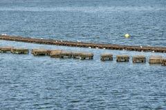Hummer schließt - Prinz Edward Island - Kanada ein lizenzfreies stockfoto