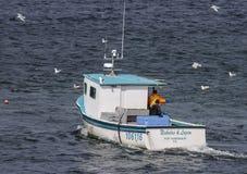 Hummerfartyg och fiskmåsar Arkivbild