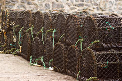hummerkrukar Arkivfoto