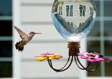 Humminbird at the feeder in the garden Stock Photos