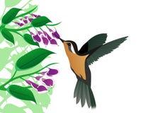 Humming-bird Royalty Free Stock Photos