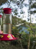 Humming Bird Drinking From the Feeder. Humming Bird Caught mid-flight on it`s way to a bird feeder Royalty Free Stock Photography
