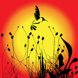 Humming bird and flower. Silhouette of the humming birds and flowers Royalty Free Stock Photos