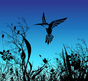 Humming bird and flower. Silhouette of the humming birds and flowers Royalty Free Stock Image