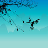 Humming bird and flower. Silhouette of the humming birds and flowers Royalty Free Stock Photography