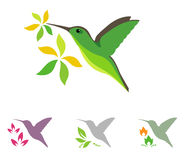 Humming bird and flower icons Royalty Free Stock Images
