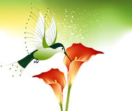 Humming bird and flowers Royalty Free Stock Photo