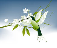 Humming bird and flowers Stock Images