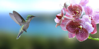 Humming bird. In french west indies stock image