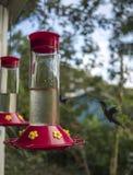 Humming Bird Headed to the Feeder. Humming Bird Caught mid-flight on it`s way to a bird feeder Royalty Free Stock Photos