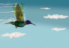 Humming bird flying Royalty Free Stock Image