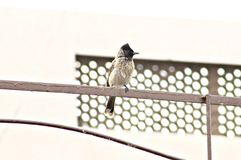 Humming Bird in Morning. Humming bird sitting on Grill Wild life royalty free stock photo
