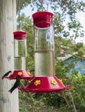 Humming Bird Perched on a Bird Feeder. Humming Bird sitting on a bird feeder Royalty Free Stock Photos