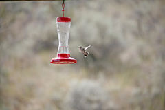 Humming bird view Stock Images