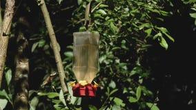 Humming birds bees and flies at a humming bird feeder
