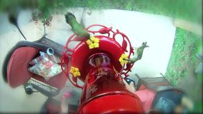 Humming birds at a feeder in HD. In my backyard filmed with a go pro hung taped above feeder for close fish eye lens shot stock video