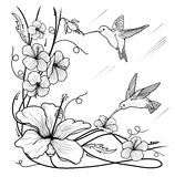 Humming-birds and flowers. On a white background Stock Image
