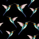 Humming birds. Seamless pattern of exotic tropical humming bird. Hand drawn illustration. royalty free illustration