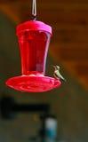 hummingbird фидера Стоковые Изображения