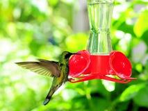 hummingbird фидера Стоковые Изображения RF