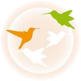 Hummingbird. Cute illustration of hummingbird over beige vector illustration